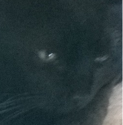 charbon, mon chat