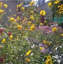 fleurs de Pondaurat
