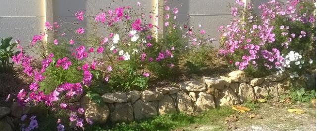 le jardin aménagé
