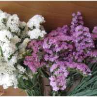 Conseil Feng shui, les fleurs séchées dans la maison, on les jette ou on les conserve?