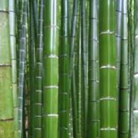 Le Feng Shui aime la propreté, nettoyez avec le Chiffon Bambou