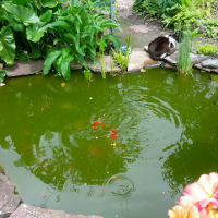 Un bassin dans le jardin apporte l'abondance.