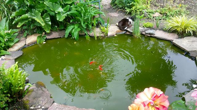 Un bassin dans le jardin apporte l abondance le blog du for Bassin a poisson le bon coin