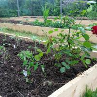 Feng Shui Jardin, le plaisir de planter.