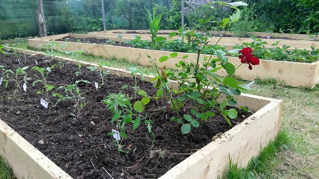 Le jardin en carrés de Pondaurat