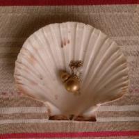 La Coquille Saint Jacques purifie et redonne de l'énergie à tout ce qu'elle touche.