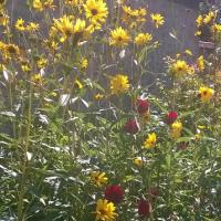 Feng Shui Jardin, le jardin en fleurs.