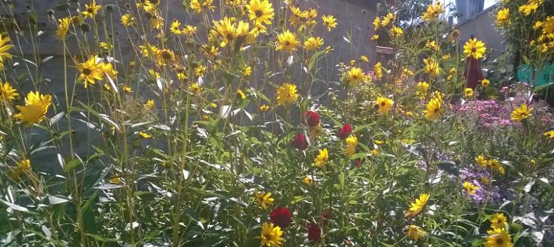 fleurs de mon jardin feng shui