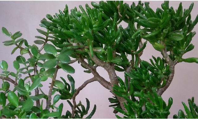 Les plantes dépolluantes bureau feng shui maison feng shui le