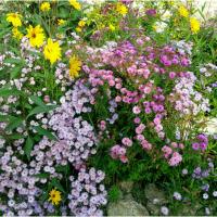 La beauté des fleurs d'automne, le jardin Feng Shui