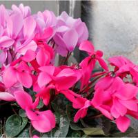 Jardin, terrasse, balcon Feng Shui, nettoyez et triez vos plantes !