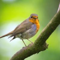 Le Chi du jardin : les oiseaux apportent une belle énergie.