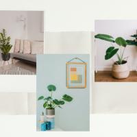 Les plantes d'intérieur favorisent un bon Chi dans votre maison.